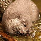Otter 1 by Robert Kendall