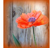 Double poppy Photographic Print