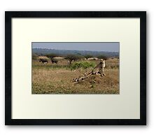 Cheetah Family And Rhinos Framed Print