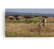 Cheetah Family And Rhinos Canvas Print