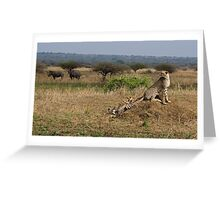 Cheetah Family And Rhinos Greeting Card