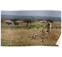 Cheetah Family And Rhinos Poster