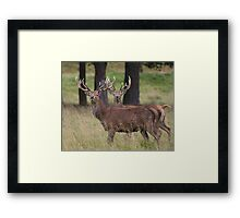 Stag Night Framed Print