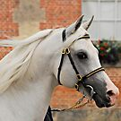 Arabian Horse by triciamary