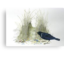 bower bird 1 Canvas Print