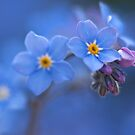 Forget Me Not Heaven by Sarah-fiona Helme