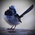 Blue Wren Again by Cathy  Walker