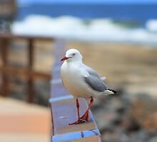 Sea Gull poser by Matt  Harvey