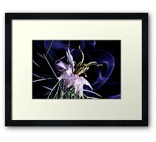 love in a mist (nigella damascena) Framed Print