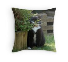 Where's Tussi? Throw Pillow