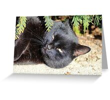 Blacky The Cat Greeting Card