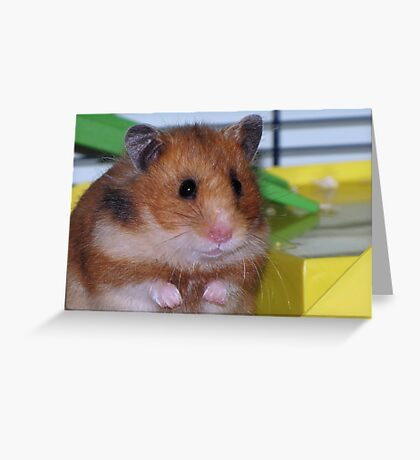 The Hamster Greeting Card