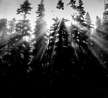 sunlight through the trees by Martin Pickard