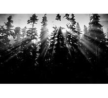 sunlight through the trees Photographic Print