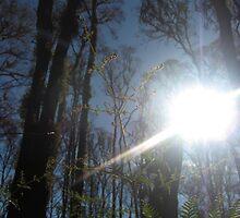 Sarah's Bushfire rejuvenation image 9 by sarahmacsmiles