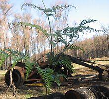 Sarah's Bushfire rejuvenation image 12 by sarahmacsmiles