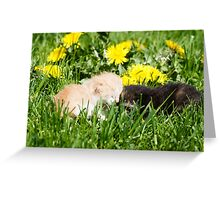 Two kittens Greeting Card
