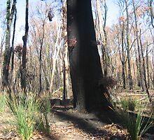 Sarah's Bushfire rejuvenation image 15 by sarahmacsmiles