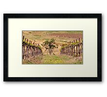 Pokolbin Vineyards - NSW Australia Framed Print