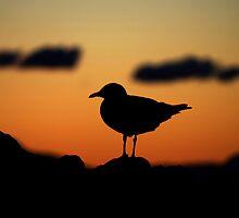 Seagull at Sunset by splitsie