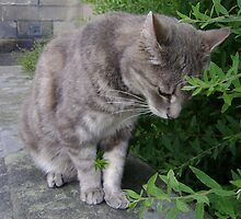 bush-cat.. oddly gripping! by armadillozenith