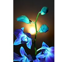 Blue Orchis stem Photographic Print
