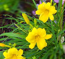 Daylily Quartet by ejosephdesign
