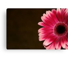 Pink & White Gerbera Canvas Print