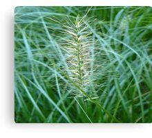 Flowering Grass Spike Canvas Print