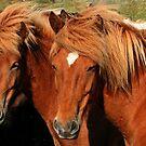 Horses at sunrise by Trine