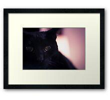 Neo the Black Cat - Portrait - 1 Framed Print