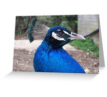if i stay really still, she may not see me! Greeting Card