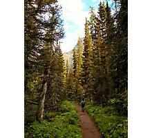 Forest near St. Mary Falls - Glacier National Park, Montana, USA Photographic Print