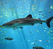 Cool Whale Shark