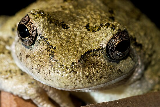 Happy Frog by Chip  Ford