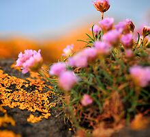 An Orange and Pink World by ally mcerlaine