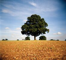 Tree in a field by fotoshoota