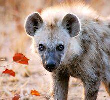 YEAH, I AM WATCHING YOU! - Spotted Hyaena - Crocuta crocuta by Magaret Meintjes