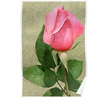 Spring Rose In Colored Pencil Poster