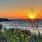 Montana del Oro campgrounds in CA by Herman Hodges