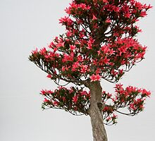 Red Bonsai by Andy Mulley