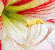 Amaryllis Macro in Colored Pencil by Julie's Camera Creations <><