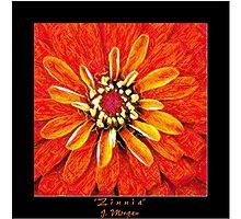 Zinnia In Colored Pencil Photographic Print