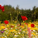 Meadow Flowers by Michael Hadfield