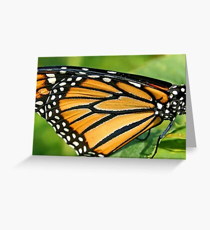 Monarch's Wing in Macro Greeting Card