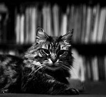 James the Cat - Portrait - 1 by RHeavenridge