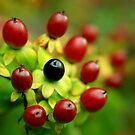 juicy berries by stellaozza
