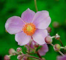 Garden Flower by Jarede Schmetterer