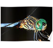 Dragonfly_Blue_Dasher Poster