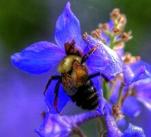Busy Bee by Larry Trupp